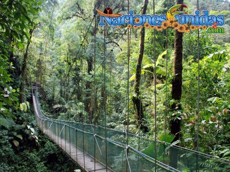 aventura en la selva ii
