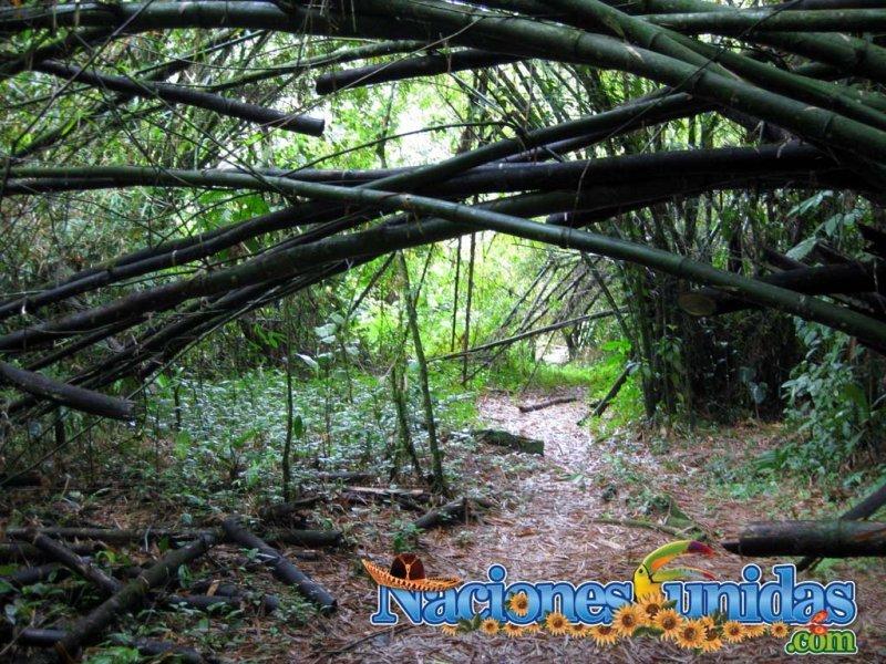 aventura en la selva iii