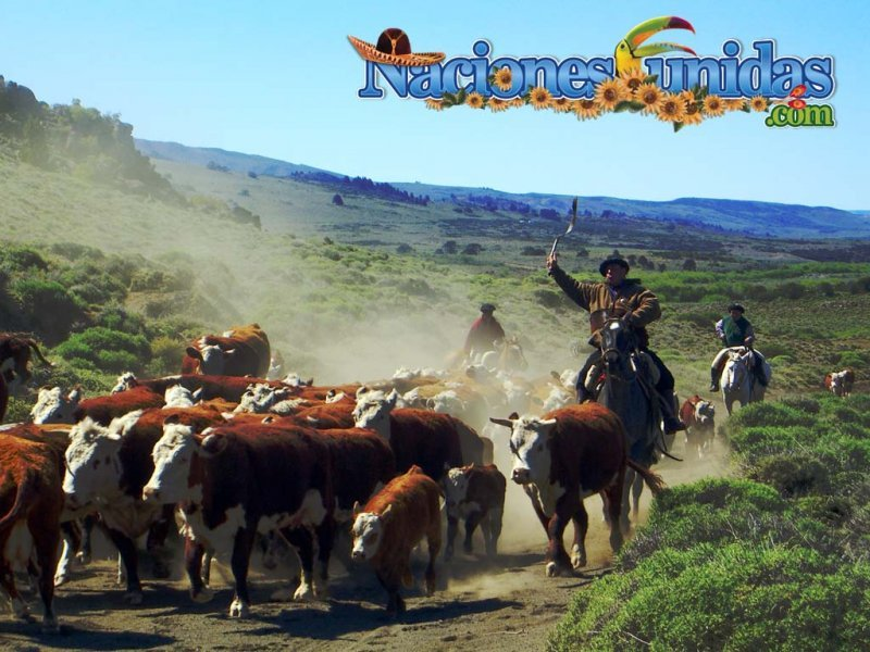 la ganaderia y el gaucho argentino